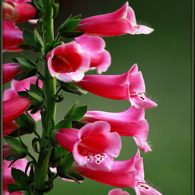 by Sandip Ray - Nature Up Close Flowers - 2011-2013