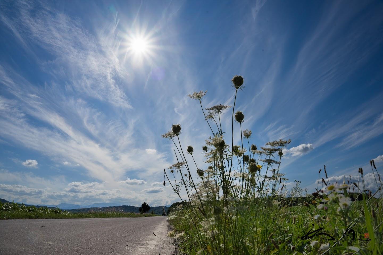 寂しげに風に揺れる野草花