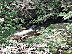 Photo: AT THE BACK OF THE YARD, YOU HAVE A BEAUTIFUL RUSHING CREEK !  IT'S AMAZING !