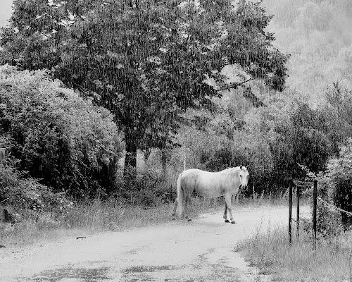 Cavallo bianco su strada bianca di mateo73