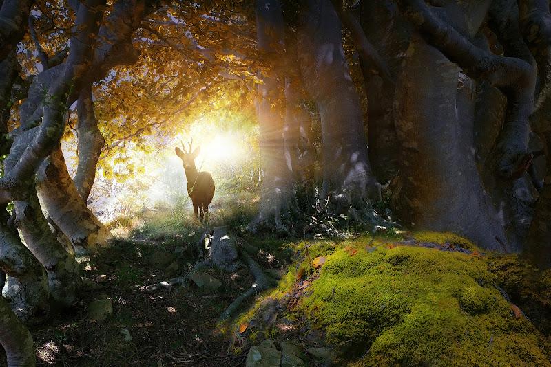 La magia del bosco di Daniela Ghezzi