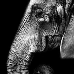 Tasha by Amanda Westerlund - Animals Other Mammals