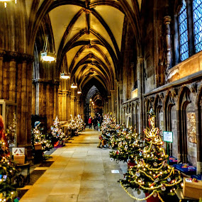 Let There Be Light And There Was  by Ian Popple - Buildings & Architecture Places of Worship ( lights, bright, worcester, cathedral, christmas trees,  )