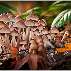 Bonnet Fungi by Mark Shoesmith - Nature Up Close Mushrooms & Fungi ( fungi, london, bonnet, wildlife, woodland )