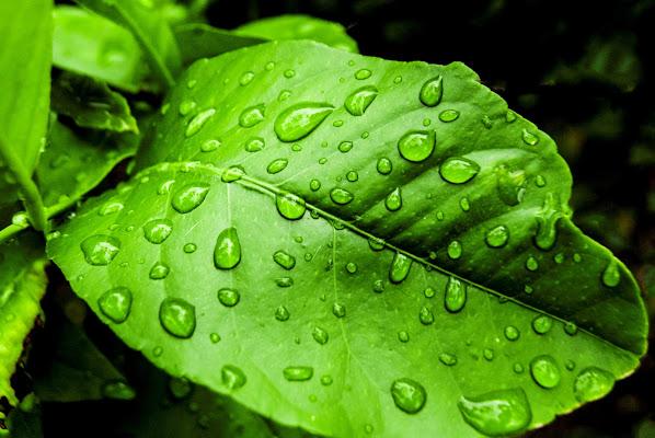Dopo la pioggia di albertocastagnaphoto