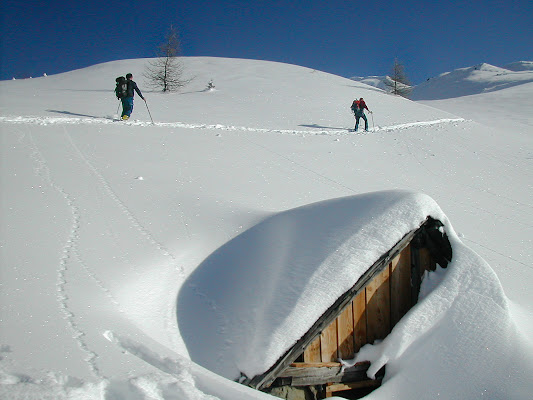 Simbiosi invernale di brunosma
