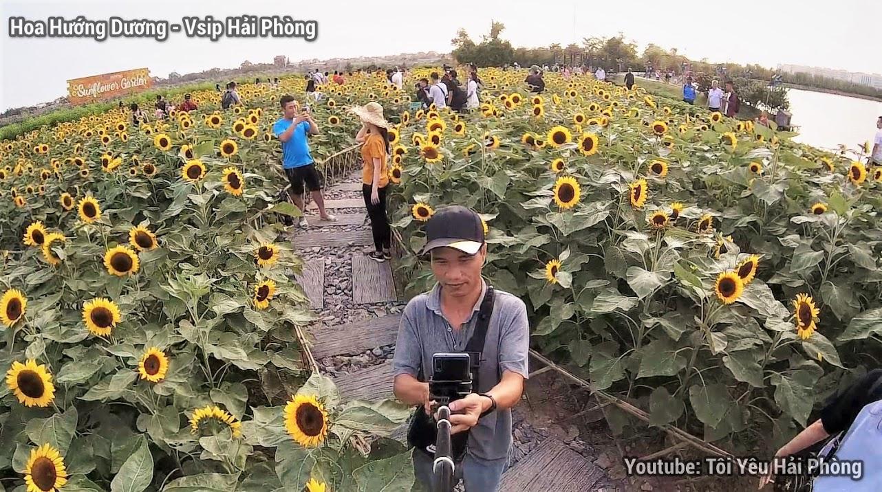 Vườn hoa Hướng Dương - Central Park Vsip Hải Phòng 2