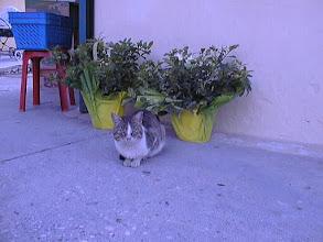 Photo: Kreikan tyypillistä eläimistöä :-)