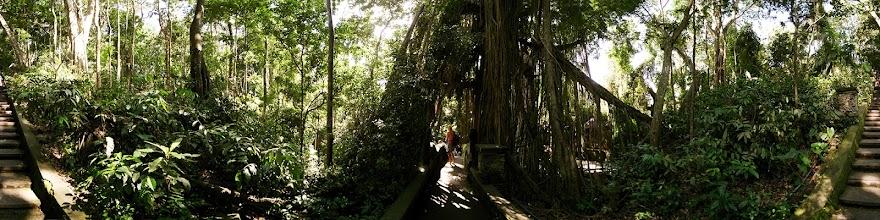 Photo: Indonesia, Bali, Ubud, Monkey Forest
