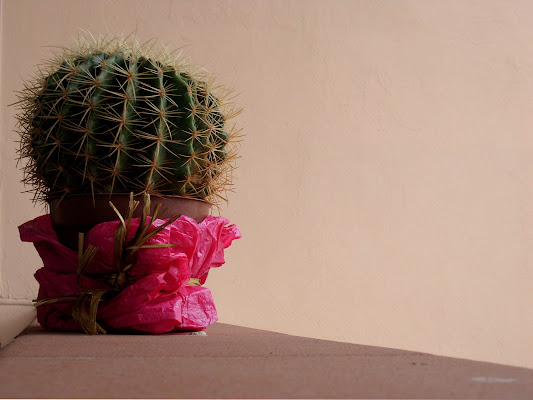 Still life pungente di Lucia Maio