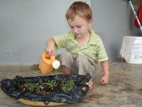 Photo: Tomatenplantjes zaaien.
