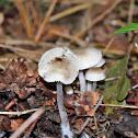 Lilac bonnet