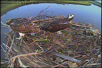 Photo: only one left to fledge