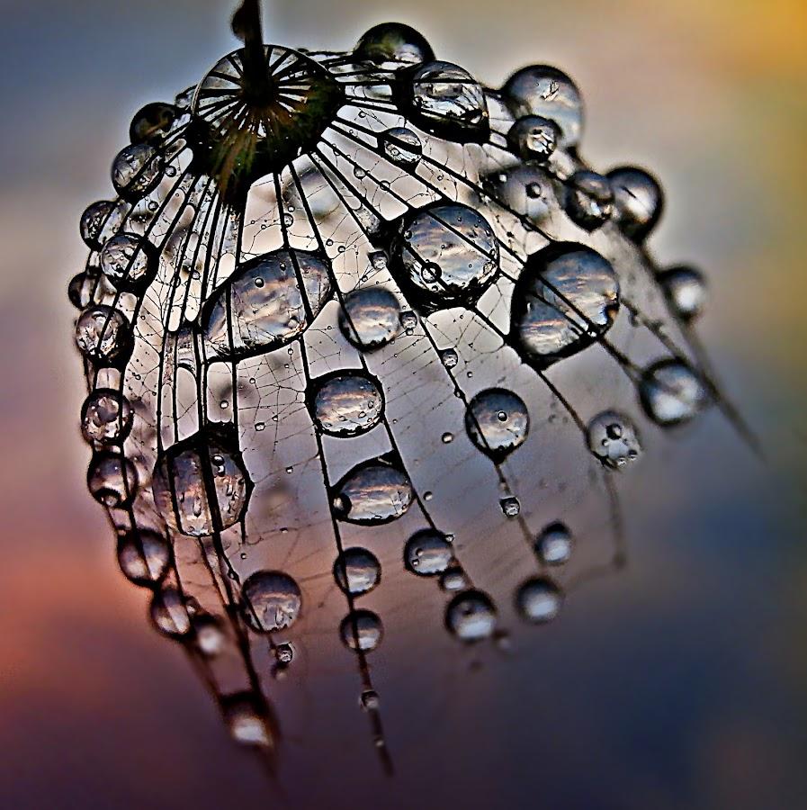 October's Bell by Marija Jilek - Nature Up Close Natural Waterdrops