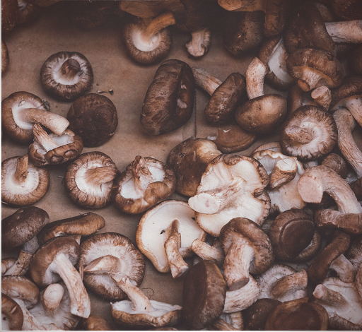 Une recette dans votre paniers Tourte chantante-Les recettes 100% bio et végétales