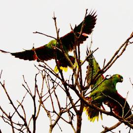 Itapura SP Brazil  by Marcello Toldi - Animals Birds