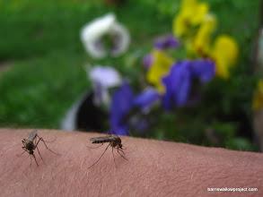 Photo: Study of a mosquito bite 1