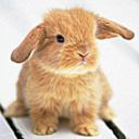Bunnies New Tab & Themes Icon
