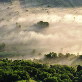 by Dragutin Vrbanec - Landscapes Prairies, Meadows & Fields ( mist morning valley forest green, sunrise )