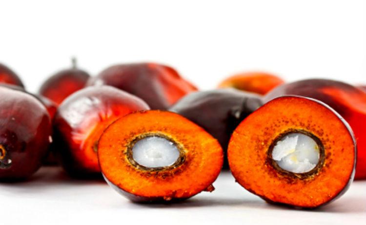 BLOG SUSTENTABILIDADE SEBRAE - RR: Óleo de palma, também chamado de  azeite-de-dendê, tem diversas aplicações