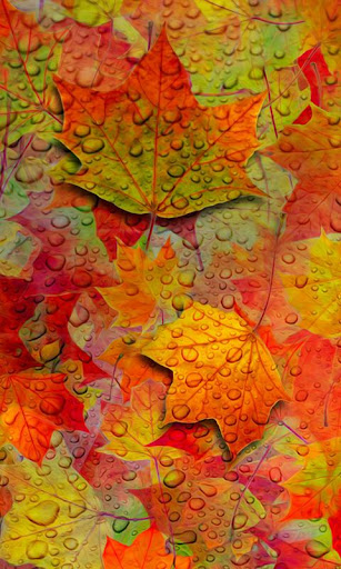 LWP のカエデの葉