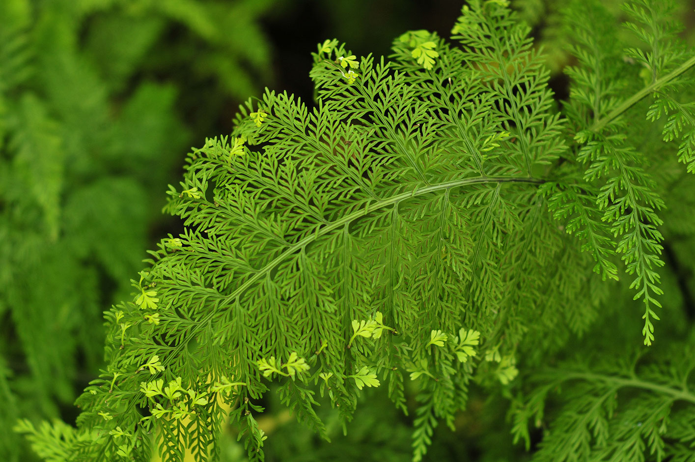 Photo: Fern at the Pacific Palisades Garden, Los Angeles, California