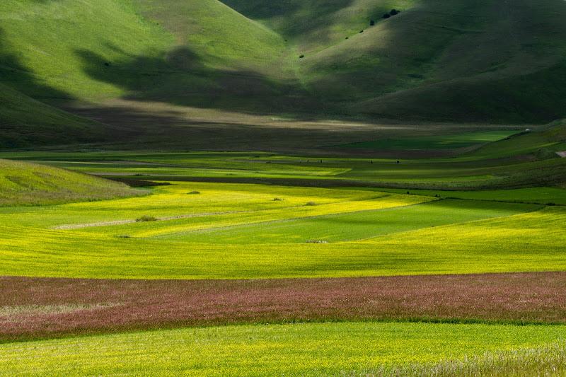 Pennellate di colore di Fiore Doncovio