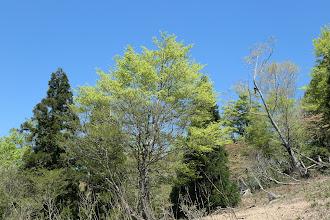 新緑と抜けるような青空