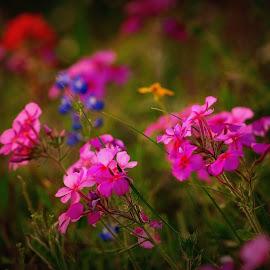 Wildflowers  by Brenda Shoemake - Flowers Flowers in the Wild (  )