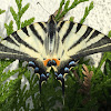 Machaon grand porte-queue