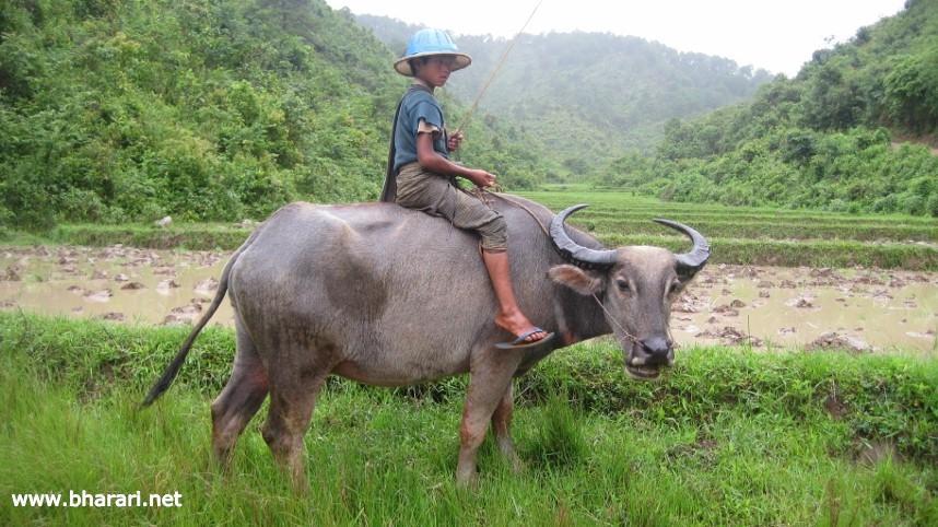 A scene from rural Myanmar