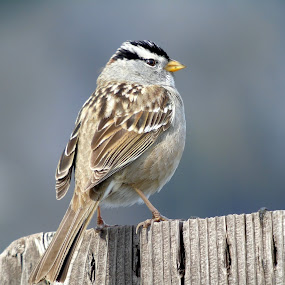FEATHERED FRIEND by Cynthia Dodd - Novices Only Wildlife ( flyer, bird, outdoors, wildlife, feathers, animal )