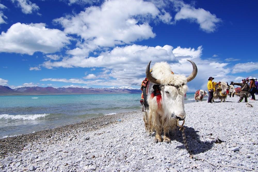 things-do-spiti-valley-yak-safari_image