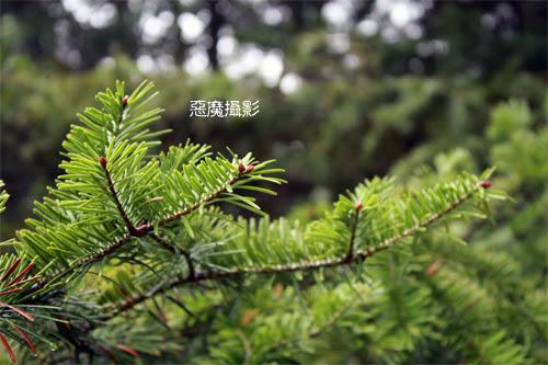 china_green_01