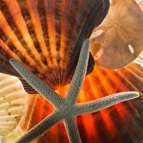 11_Dec_03_Shells01.jpg