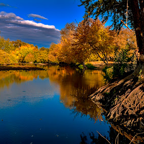 Boise River Autumn and tree root by Charles Knowles - Landscapes Waterscapes ( water, idaho, boise, autumn, fall, pwcautumn, trees, river )