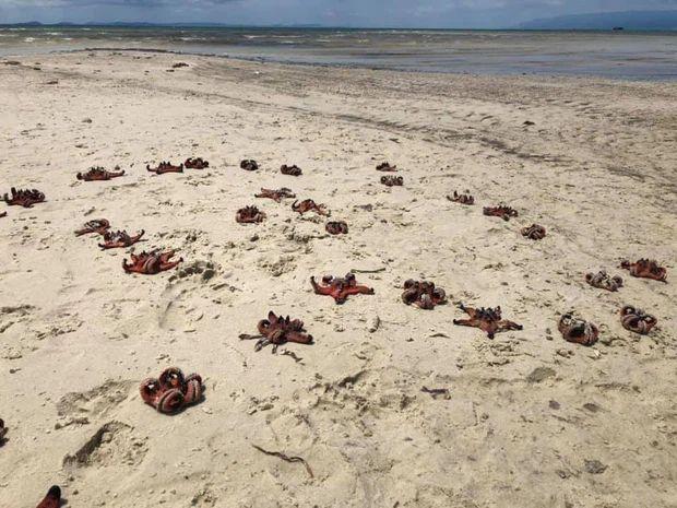 Quỳnh Anh Shyn - An Vy (FAPTV) bị đào lại loạt ảnh bikini với sao biển-1