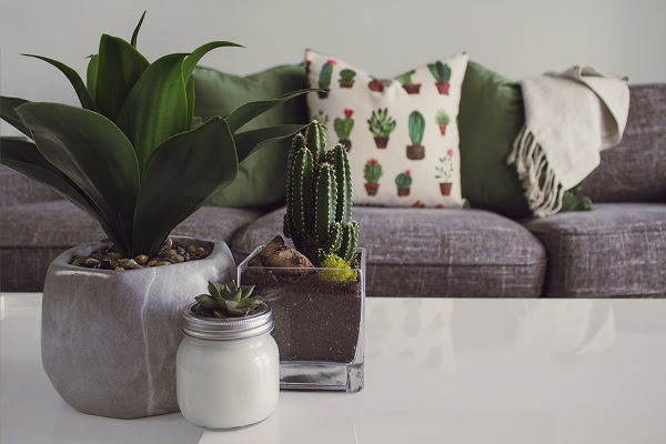 Stay Healthy & Happy : The Best Indoor Plants India