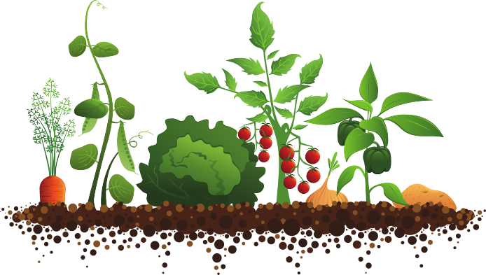 growing-vegetables-clipart-1.jpg