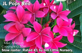 Photo: Pops Red (JL) - San Diego, CA - East San Diego county