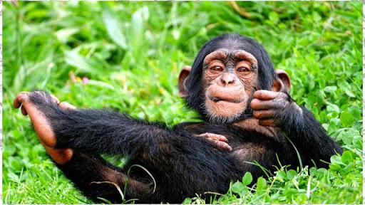 MonkeyTheme