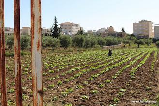 Photo: Beit Sahour