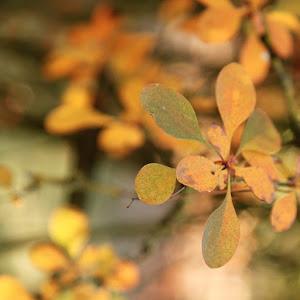 feuilles-jaunes-vertjpg