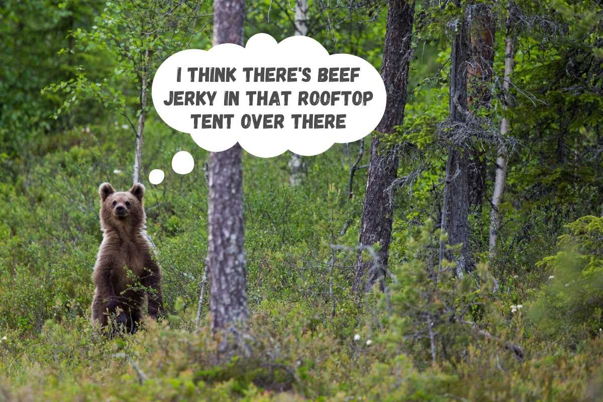are rooftop tents safe from bears