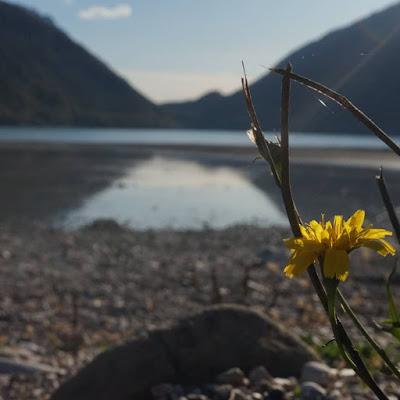 Fiore del lago di patsie_1506