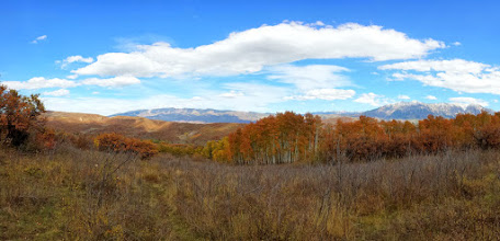 Photo: Panorama of aspen trees in full color with the Raggeds in the background.