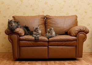 Home Remedies to stop your cat from peeing on your couch