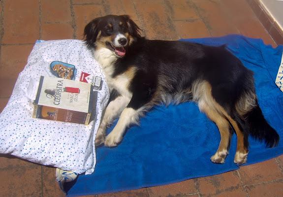Vita da Cani ....in questo periodo di Yuma