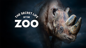 The Secret Life of the Zoo thumbnail