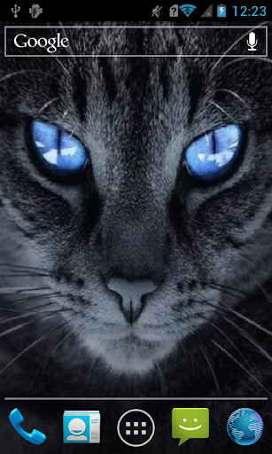 Cat with blue eyes Live WP